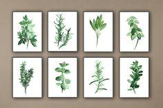 Küche Kräuter Kunstdrucke Satz von 8 grüne botanischen Herbalist Küche Decor Wandmalereien ist der Preis für einen Satz von 8 Kunstdrucke: Petersilie Estragon Salbei Basil Thymian Brennnessel Rosemary Ordonanz Art von Papier: Drucke bis zu (42 x 29, 7cm), 11 X 16 Zoll Größe auf Archivierung Säure frei 270g/m2 weiß Aquarell Fine Artpapier gedruckt und behält das Aussehen des original-Gemälde. Größere Drucke werden auf 200 g/m2 weiß Semi-Glossy-Papier gedruckt. Farben: Archival hoch...