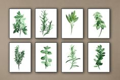 Kitchen Herbs Art Prints Set of 8 Green Botanical Herbalist Kitchen Decor Wall Paintings The price is for a set of 8 Art Prints: Parsley Tarragon