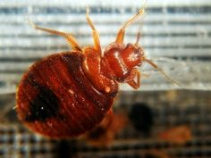 Which Cities have the Worst Bed Bug Problem? Find out here! #bedbugs #worstcities