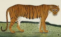 the paper zoo 500 years of art and science