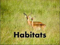 Habitats of Animals-What is a Habitat? -Video Lesson & Quiz for kids - YouTube