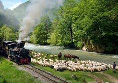 Romania. Mocanita is a forest narrow gauge train pulled by a steam locomotive.
