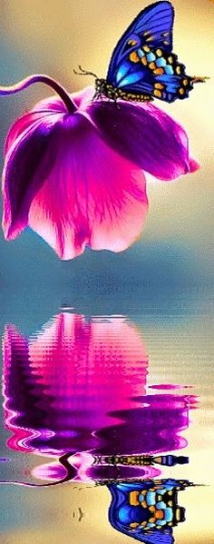 Blue+Butterfly+on+a+Pink+Flower.jpg (240×610) #mariposas #butterflies
