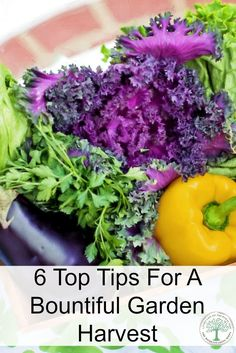 A few simple steps and you will be enjoying tasty homegrown veggies in no time. Here are the top 6 you need! TheHomesteadingHippy via @homesteadhippy