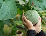 Sadenie mrkvy, hrachu, fazuľe, cibule či kalerábu – kedy a ako Fruit, Garden, Compost, Garten, Lawn And Garden, Gardens, Gardening, Outdoor, Yard