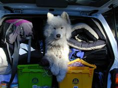 8 Things to Know About How To Take a Road Trip with Kids and Pets | Charlie The Cavalier