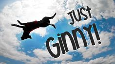 Just Ginny!  #amazing #dog #tricks #performance #agility #frisbee #discdog #handwalk #funny #cute