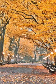 "earthyday: "" NEW YORK AUTUMN DREAMS  by Konstantinos Metallinos """