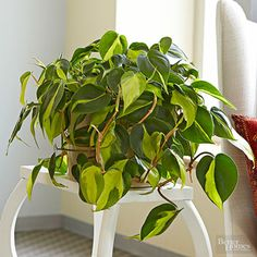 Do you feel like a serial houseplant killer? You might want to try growing these 11 plants -- in your bathroom.