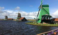Three windmills at Alkmaar