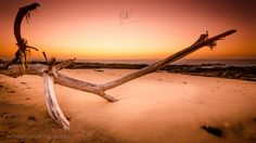 Official website of Craig Coetzer, South African Fine Art Landscape Photographer Long Exposure Photos, Kwazulu Natal, Landscape Photographers, Amazing Places, Driftwood, Sunlight, Places Ive Been, South Africa, The Good Place