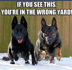 You're in the wrong yard.