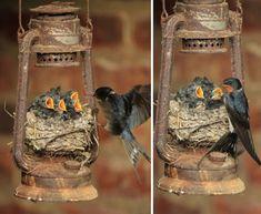 Самые невероятные места для птичьих гнезд – 27 фотографий