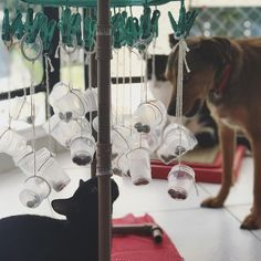 Use a sock dryer, small plastic containers and string to ma. Use a sock dryer, small plastic containers and string to make a hanging foragi - Cute Dog Toys, Diy Dog Toys, Best Dog Toys, Cat Toys, Brain Games For Dogs, Dog Games, Modern Dog Toys, Jouet Kong, Pet Dogs