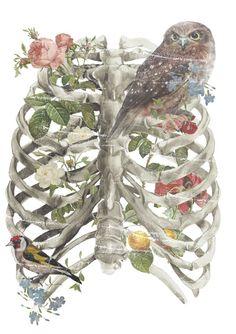 ribcaged