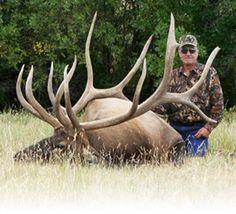 Big bull elk - OUTDOORSMAN.com