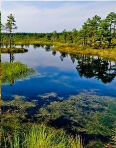 Lahemaa National Park,Estonia