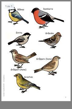 Teaching Biology, Teaching Kids, Animals Of The World, Animals And Pets, Animals Name In English, Finnish Language, Learn Swedish, Montessori Science, Felt Birds