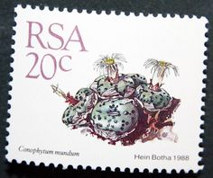 Succulents on Stamps: Conophytum obcordellum, South Africa, 1988 | World of Succulents