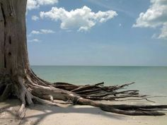 Lovers Key https://www.pinterest.com/ftmyerssanibel/lovers-key-state-park/