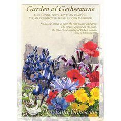 http://www.holylandblossoms.com/the_gethsemane#.UWswLLVJOAg #Bouquets #GardenofGethsemane #HolylandBlossoms