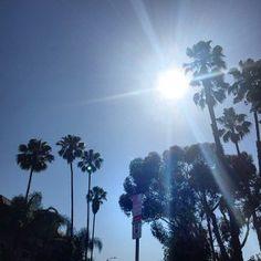 #LA #PalmTrees #Sunny