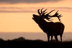 Manipulating Natural Light in Wildlife Photography - Using side lighting, backlighting and silhouettes to add impact to your wildlife images