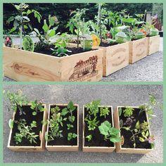 Salons, Plants, Veggie Gardens, Dekoration, Lounges, Plant, Planets