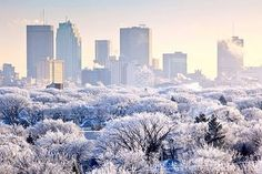 Winnipeg skyline and hoar frost covered trees, on a winter day. Winnipeg, Manitoba, Canada