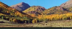 Colorado fall aspen Victor Cripple Creek.  Had a great great Aunt who owned a ranch there...it was so beautiful !