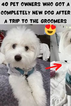 The groomer is an essential part of owning a pooch. Without a regular visit, our pups can become frizzy, matted, and long in the claw. Even though the groomer is essential, that doesn't always mean they do a good job, however! These are some of the best (and worst) before and afters of people who took their dog to get groomed and ended up picking up a new dog!