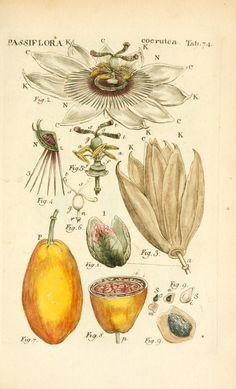 v. 2 (1789) - Illustratio systematis sexualis Linnaeani, - Biodiversity Heritage Library