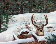 Winter Rest A Giclee print of a Mule Deer in by KarenCadeArtworks, $40.00