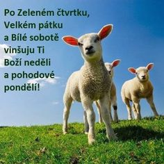 Lamb, Animals, Stuff Stuff, Animales, Animaux, Animal, Animais, Baby Sheep