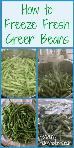 How to Freeze Fresh Green Beans. If you can grow them you can freeze them. If you are lucky enough to find a fresh supply just as good. Freeze Fresh Green Beans, Frozen Green Beans, Can Green Beans, Freezing Green Beans, Freeze Beans, Fresh Green Bean Recipes, Growing Green Beans, Freezing Fruit, Beans Beans
