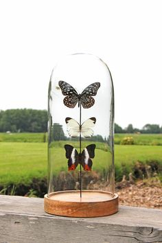 Glassdome with butterflies Insect Art, The Bell Jar, Bird Feeders, Wine Glass, Butterfly, Outdoor Decor, Diy, Jars, Living Room