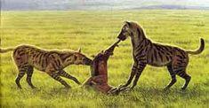 Prehistoric animals: Chasmaporthetes australis.