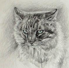 Furry thing by Finchwing.deviantart.com on @DeviantArt
