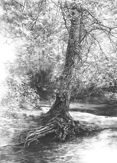 Tree Drawings 50 amazing pencil drawings | drawing trees, drawings and rivers