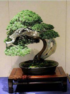Ikebana, Juniper Bonsai, Miniature Trees, Visionary Art, Renaissance Art, Art Of Living, Horticulture, House Plants, Planter Pots