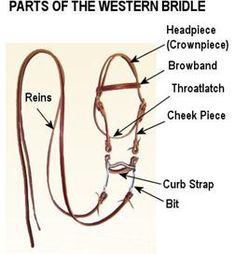 Western Bridles, Western Horse Tack, Western Riding, Horse Information, Horse Facts, Horse Camp, Equestrian Outfits, Equestrian Style, Equestrian Fashion