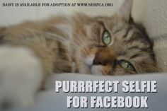 #nofilter #selfie #adopt  a natural beauty from the New Hampshire SPCA! www.nhspca.org