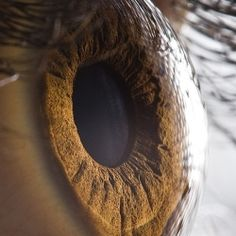 Existence offers you a new chance every single instant. It is called Now. (Extreme Close Ups Of Human Eyes by photographer Suren Manvelyan)
