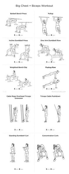 Big Chest + Biceps Workout
