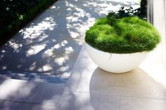 Tani ogródek przed domem to również ogródek w donicy - zainspiruj się! Mięciutka trawa w donicy to nie tylko tanie rozwiązanie, ale również nowoczesny design na zieleń przed domem! Zapraszam do kolejnego wpisu na blogu u Pani Dyrektor - zobacz drugą część wpisu o tym jak urządzić zieleń przed domem i zainspiruj się!