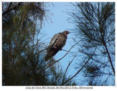 Olhar do fotografo. http://fotografiasferrarezi.blogspot.com.br/