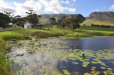 #Overberg #Stanford close to #Hermanus en #Gansbaai #StandfordHills #lovelycottages and #safaritents #farm #lake #nature #food #wine #hospitality #glamping #horseriding #proteas #flora #$$ #$$$