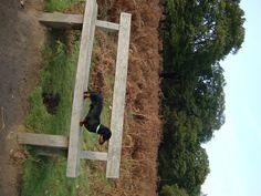 Dachshund on Richmond Park bench