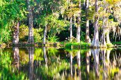 still and dark water... the Magnolia Plantation swamp near Charleston, SC