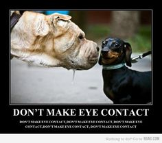 don't make eye contact...